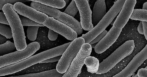 Bacteria in carpets