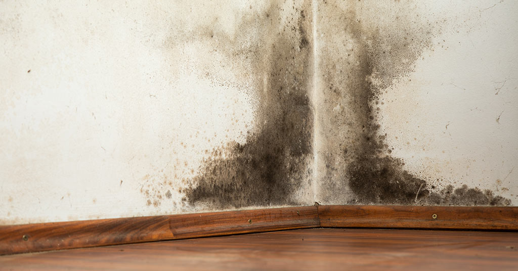 Mould: Why It's Worth Taking Seriously