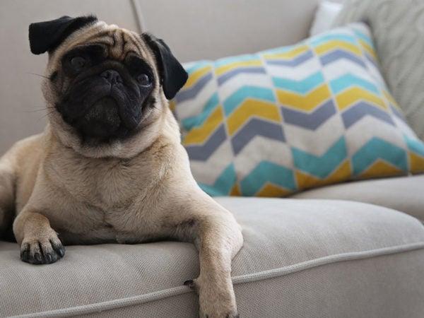 best fabrics upholstery pets