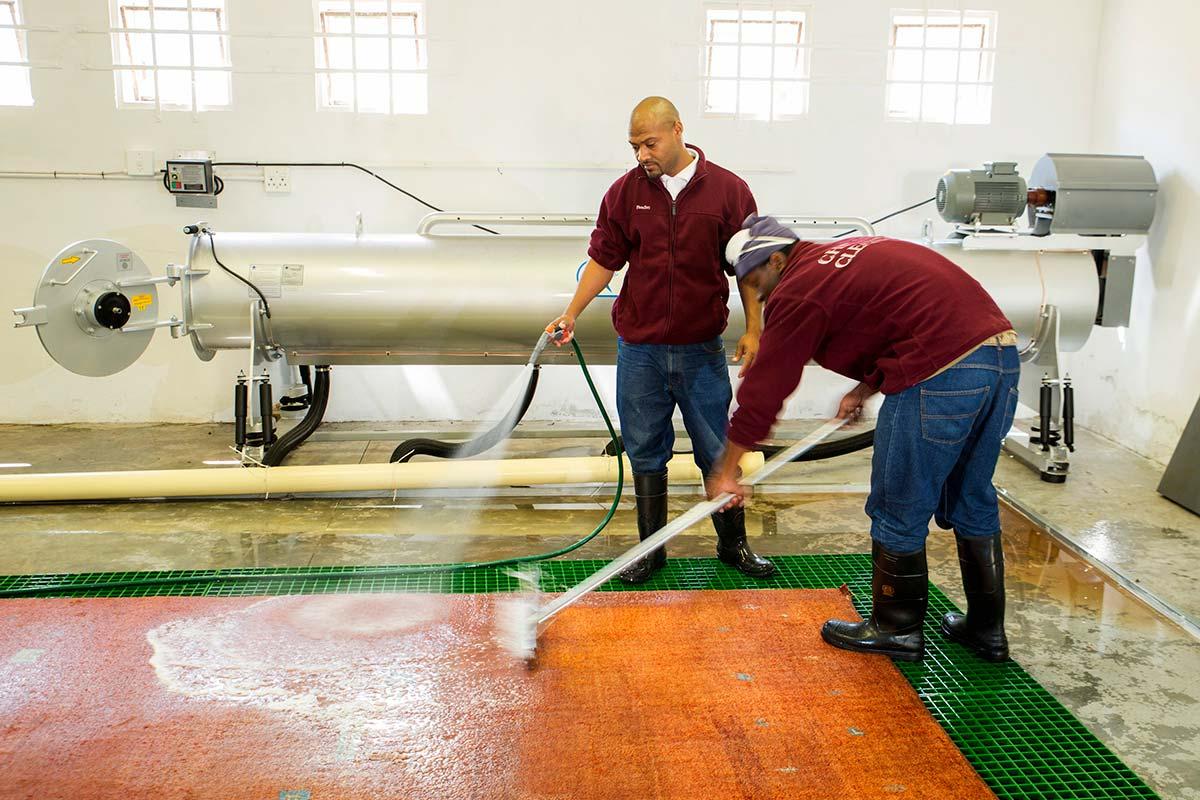 rinsing carpet